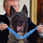 Media Loses Poop Over Trump/Dog Meme